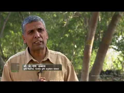 Bitter Gourd Farming (करेले की खेती ) In Baatein Kheti Ki - On Green TV