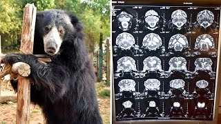 Rescued Bear Making Miracle Recovery From Illness