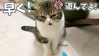 遊んで欲しい猫を放置した結果…
