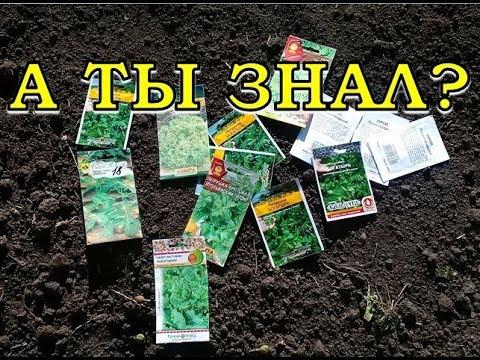 Что сажать и сеять в ИЮЛЕ? Перечень огородных работ