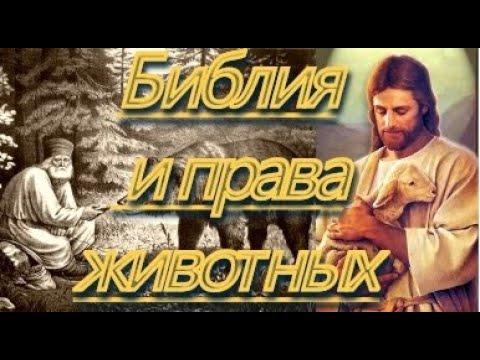 """Библия и права животных. ...и сказал Бог: """"Всё, что вы делаете братьям меньшим, вы делаете мне""""..."""