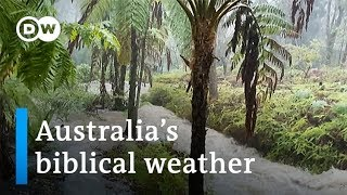 Australia goes from brutal bushfires to flash floods | DW News