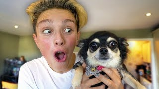 MUM SURPRISES KID WITH PUPPY ON BIRTHDAY!! (emotional) *PRANK WARS*