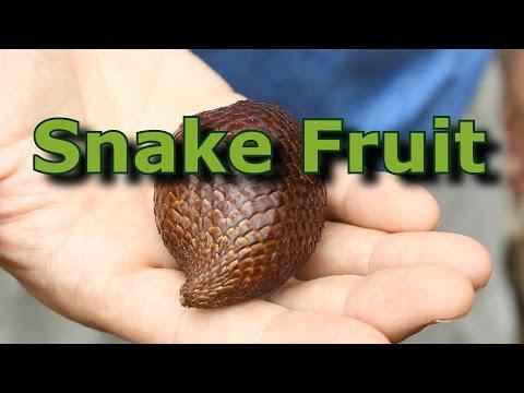 Exotic Tropical Fruit: Salak AKA Snake Fruit