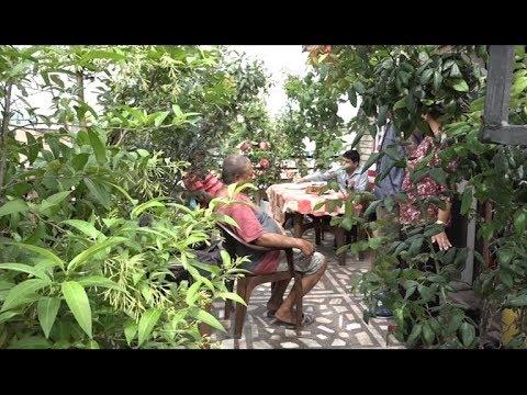 घरको छतमै घना जंगल काठमाडौंमा ||ROOF TOP GARDENING||