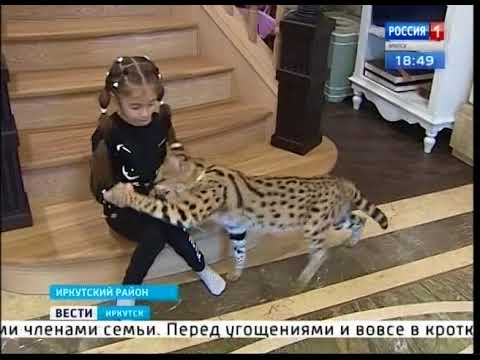 Вопрос: Можно ли держать дома кота и кошку, и чем опасно?