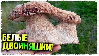 ФАНТАСТИКА БЕЛЫЕ грибы в ИЮНЕ 2020