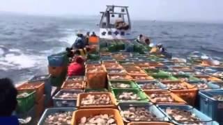 オホーツク海 ホタテ稚貝放流