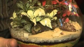 Florarium Utro na Enisee(Группа в Контакте: http://vk.com/flora24., 2012-11-08T21:51:06.000Z)