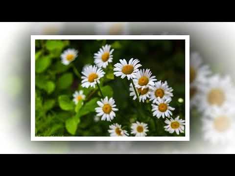 Смотреть клип Цветочное регги онлайн бесплатно в качестве