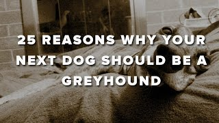 25 Reasons Why Your Next Dog Should Be A Greyhound