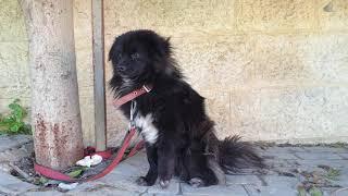 كلب الزينه قرر صاحبه الاستغناء عنه السبب مع جمال العمواسي