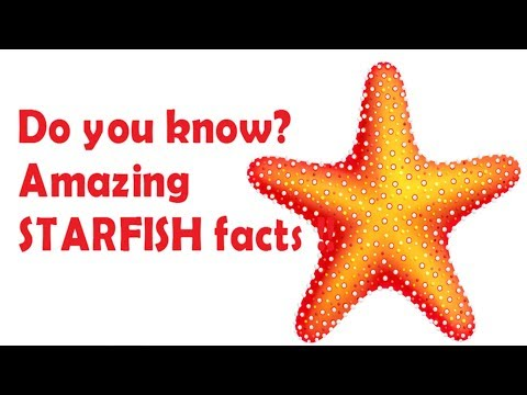 Starfish Facts For Kids - Facts About Sea Star For Children - Simply E-learn Kids