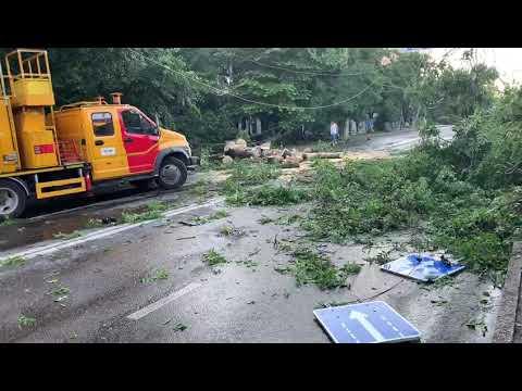 Упавшие деревья парализовали движение на одной из главных магистралей Симферополя