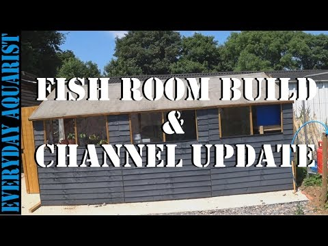 Shed Fish Room Build #1 & Channel Update