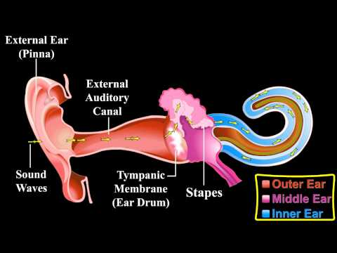 the-ear-!!!---about-the-ear-!!!---mechanism-of-hearing