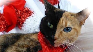 10 Кошек, на которых не пожалела красок сама мать-природа