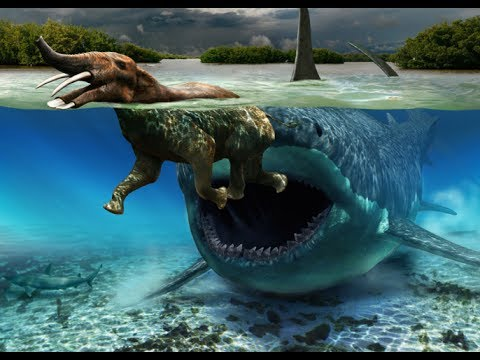 Sea Monsters Megalodon REAL MEGALODON ...