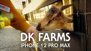 DK Farms | Bumblebee - iPhone 12 Pro Max 4K HDR