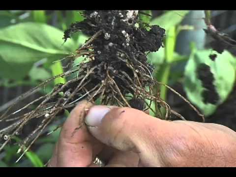 The Soil Solution Film Preview