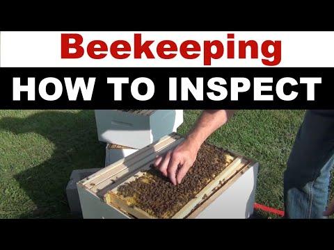 Honey Bee Hive Inspection
