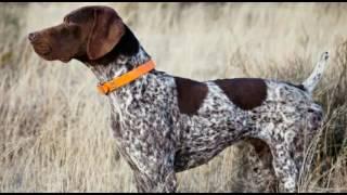 10 najlepszych psów policyjnych (K 9)