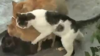 Приколы с кошками Групповые занятия Коты и кошки