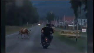 Сбили корову на мопеде//Приколы на дорогах//Бабы за рулем//Hit a cow on a moped//Fun on the roads