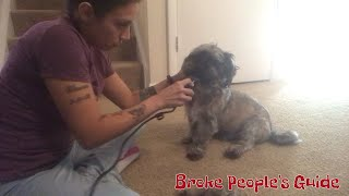 Dog grooming: how to cut your dog's hair