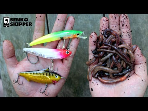 Pier Fishing: Which works better? Lures VS Live bait