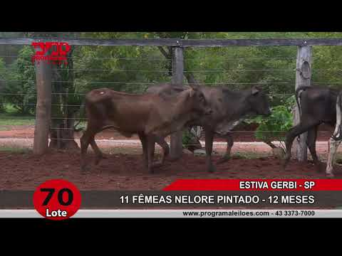 LOTE 070