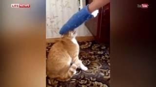 Кот мститель загнал хозяина на балкон   Cat Gets Revenge