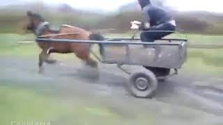 Auto Tunig O Caballo Tuning