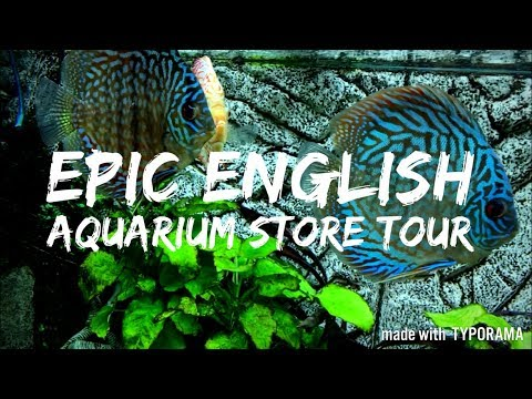 EPIC ENGLISH AQUARIUM STORE TOUR! | NAUTILUS AQUATICS | With A Special Guest
