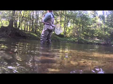 Fly Fishing In Cherokee ( Trophy Section}