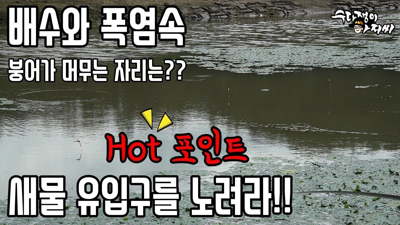 배수와 폭염 그리고 붕어낚시 #낮에나온월척#새우미끼