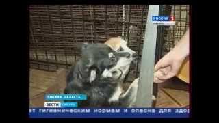 Омский приют для бездомных животных отмечает юбилей и подводит итоги своей работы