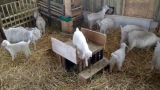 Visite de la ferme Mohaire du Grand Chambord
