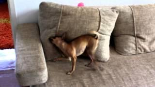 Прикол (Выход из-за подушки эпичен :D)