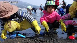 青森県むつ市大湊の芦崎湾で29日、春の風物詩「潮干狩り」が行われ、...