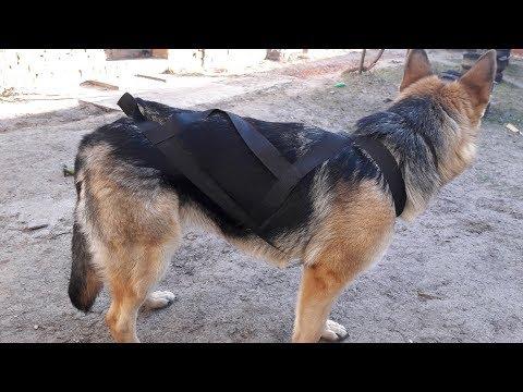Как сшить для собаки ездовую шлейку для собаки