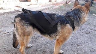 Шлейка ездовая для собаки за 1 доллар!