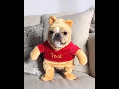 This Dog Won Halloween - YouTube