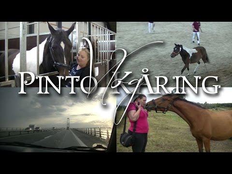 Pinto Kåring - Vlog + Besøg hos Angel