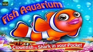 Pocket Aquarium Preview HD 720p