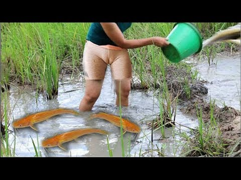 Beautiful Sexy Girl Cambodia Traditional Fishing How to Catch Fish Water Snake Amazing Sexy Girl2017