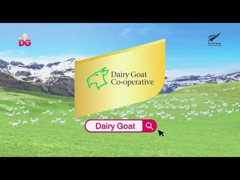 นมเเพะผง DG by Dairy goat ประเทศนิวซีเเลนด์