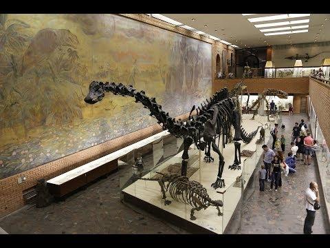 Москва: палеонтологический музей / Dinosaurs in Moscow