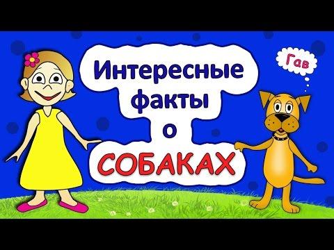 Интересные факты о собаках / Интересные факты для детей