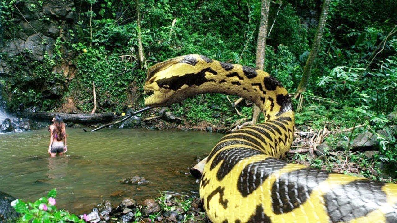 أضخم ثعبان وجده الانسان في غابات الأمازون.. كم يبلغ حجمه ؟!